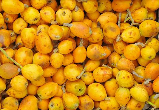 Ripe marula fruit